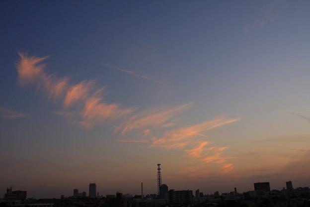 魚の骨形雲 1018