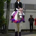 写真: 川崎競馬の誘導馬05月開催 藤Ver-120514-01-large