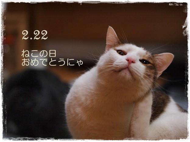 Photos: にゃんにゃんにゃんの日
