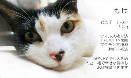120303-もけちゃん新しい家族募集ちぅ!
