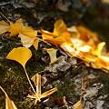 Photos: 『秋の名残り。。。』