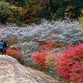 写真: 『彩歩。。。』 ~愛知県 小原村~