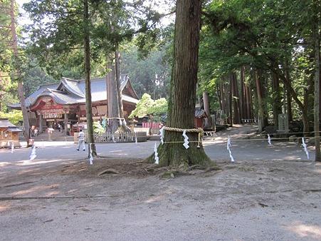 北口本宮富士浅間神社 神木