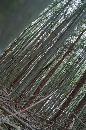 bamboo03232012dp2-01