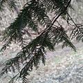 Photos: leaves03232012dp2
