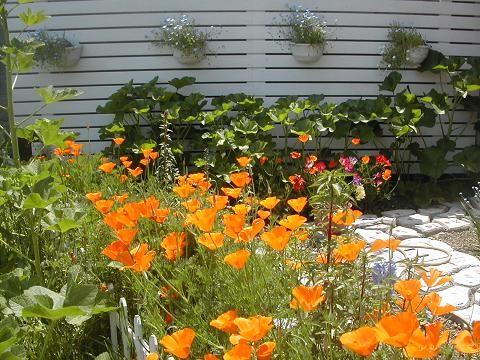 カリフォルニアポピー ガーデン