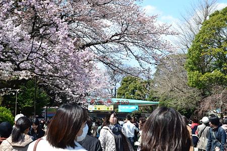 上野動物園へ@上野公園[4/4]