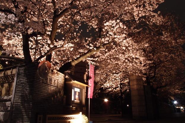 Photos: 本誓寺の夜桜 07
