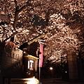 写真: 本誓寺の夜桜 07