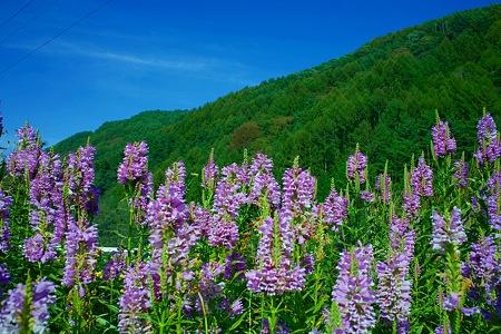 長谷村の風景(SDIM0186)