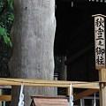 Photos: CIMG9137 秋宮二之御柱その2