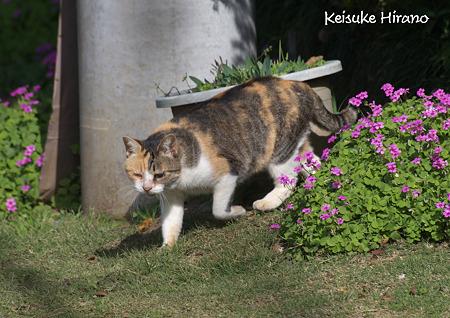 シゲ子さん登場
