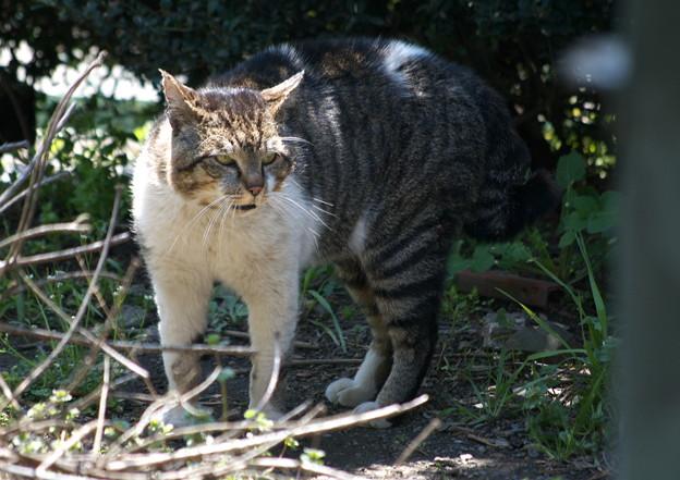ビリケン猫