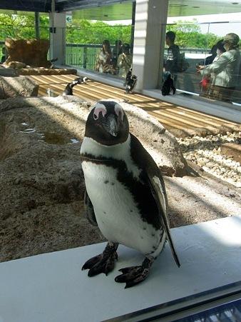 20120428 京都水 ペンギン広場06