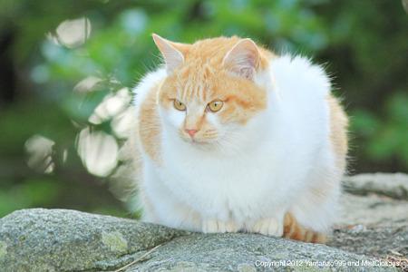 yamanao999_cats_086
