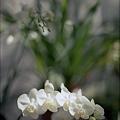 写真: 201201-02-029PZ