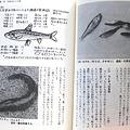 写真: クチボソ、雷魚の話