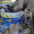 Photos: 2552_cat