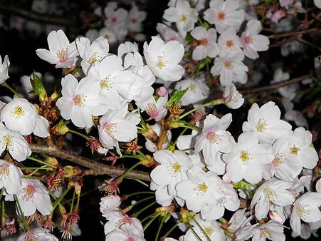桜の季節も終わり