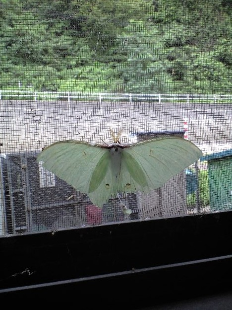 珍しい色の蛾