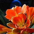 Photos: 青い惑星と花と