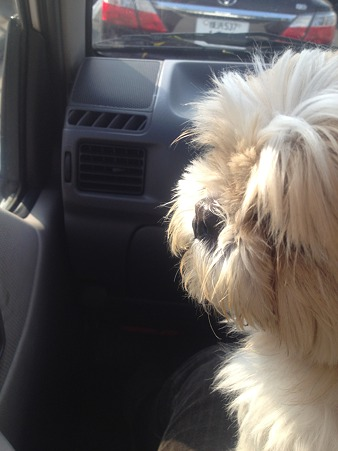 ドライブ中