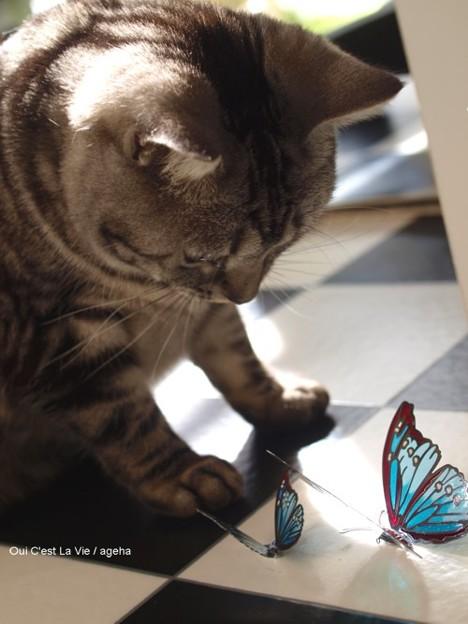 チョウを愛でる猫。