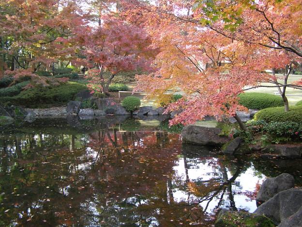 写真: 大田黒公園の紅葉と池