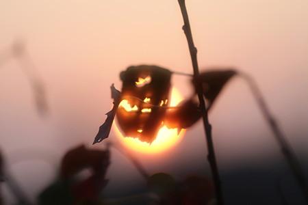 病葉と夕陽