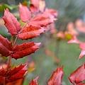 Photos: 早春の紅葉
