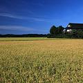 写真: 追憶・双葉町の田園