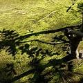 苔と影模様