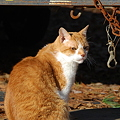 Photos: Rusty Cat 12-3-11