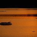Photos: The Drift Wood and the Ducks