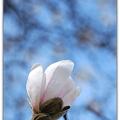 Photos: Marrill Magnolia 4-14-12