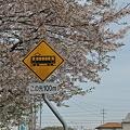 桜の瀬戸電 (3) 2012年 4 月