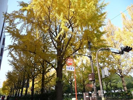 111130-横浜 紅葉  山下公園通り (8)