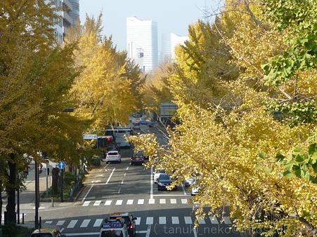 111130-横浜 紅葉  山下公園通り (34)