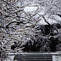 Photos: 居士林1-20120229