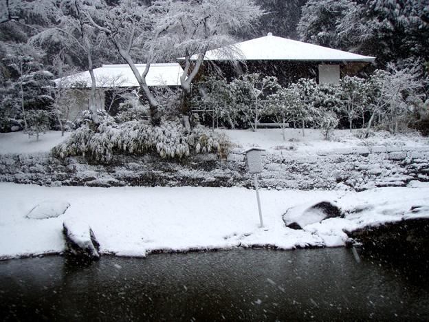 Photos: 円覚寺妙香池20120229