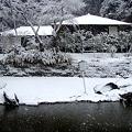 円覚寺妙香池20120229