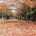 合浦公園・落ち葉と紅葉01-11.11.01
