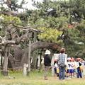 合浦公園・社会見学・三譽の松01-12.07.04
