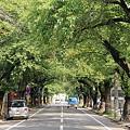 桜並木の初秋01-11.09.09
