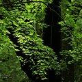 緑陰の季節