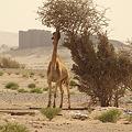 Photos: 砂漠の孤城2