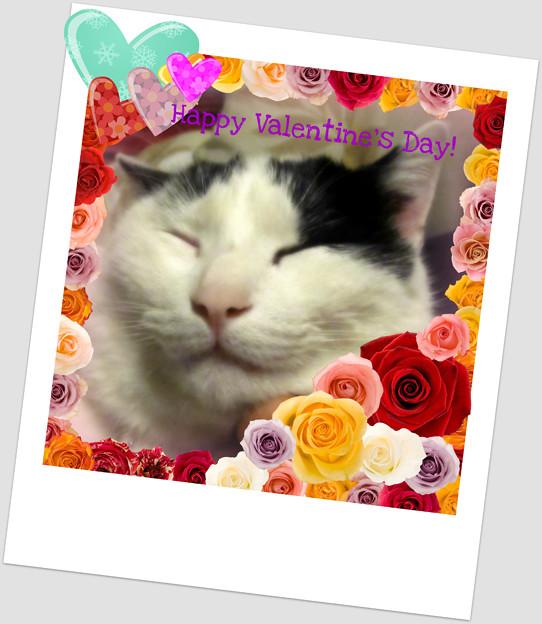 写真: バレンタインカード