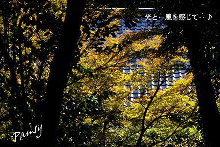 秋の浄妙寺・・2