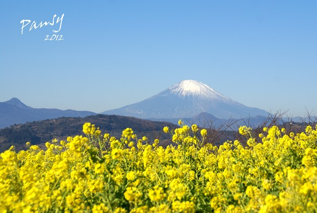 写真: yellow and blue..