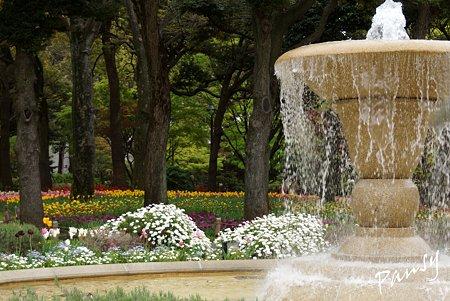 横浜公園のチューリップ 60